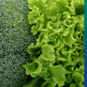 The importance of life expectancy - Daily 500 grams of vegetables